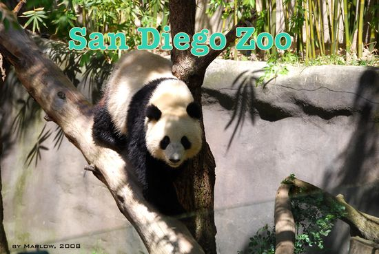 Sunkissed: San Diego Zoo