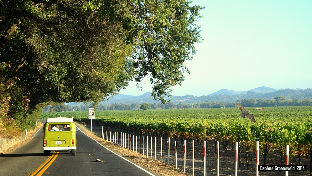 Napa Valley - via It's Travel O'Clock
