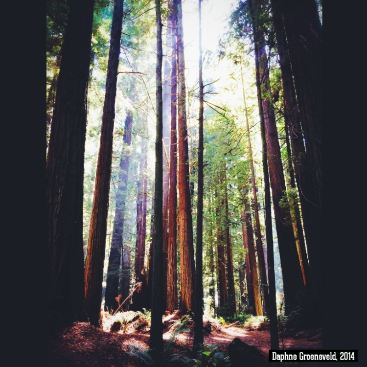 Redwoods California - via It's Travel O'Clock