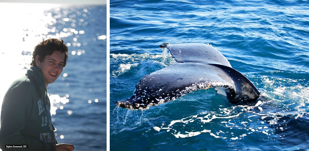 Whale watching in Hervey Bay, Australia | via It's Travel O'Clock